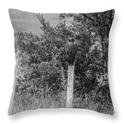 Los Tres Amigos-bw Throw Pillow