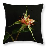 Lost Beauty Throw Pillow