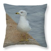 Lost Seagull Throw Pillow