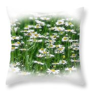 Lotsa Daisies Throw Pillow