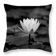 Lotus Blooms Throw Pillow