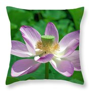 Lotus--fading IIi Dl0081 Throw Pillow