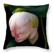 Lotus In The Evening  Throw Pillow