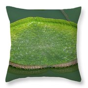 Lotus Leaf In The Marsh Throw Pillow