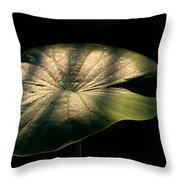 Lotus Leaves Morning  Shower Throw Pillow