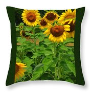 Louisa, Va. Sunflowers 3 Throw Pillow