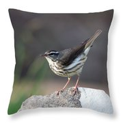 Louisiana Waterthrush Throw Pillow