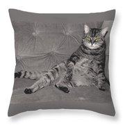 Lounge Cat Throw Pillow
