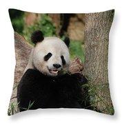 Lounging Giant Panda Bear With A Shoot Of Bamboo Throw Pillow