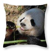 Lovable Giant Panda Bear With Big Paws Throw Pillow