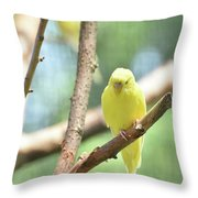 Lovable Little Budgie Parakeet Living In Nature Throw Pillow