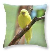 Lovable Yellow Budgie Parakeet Bird Up Close Throw Pillow