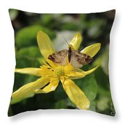 Tasting Marsh Marigold  Throw Pillow