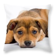 Love Me Puppy Throw Pillow