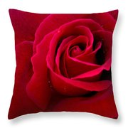 Love Red Rose Throw Pillow