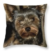 Loveable Yorkie  Throw Pillow