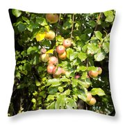 Lovely Apples On The Tree Throw Pillow