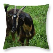 Lovely Billy Goat With Silky Black And Brown Fur Throw Pillow