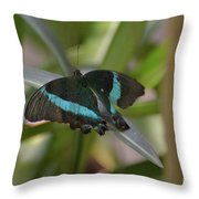 Lovely Blue And Black Emerald Swallowtail Buterfly Throw Pillow