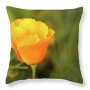 Lovely Buttercup Flower. Throw Pillow