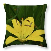 Lovely Close Up Of A Yellow Lily In Full Bloom Throw Pillow