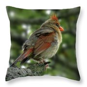 Lovely Female Cardinal Throw Pillow