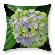 Lovely Hydrangea Throw Pillow