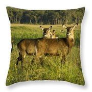 Lovely Ladies Throw Pillow