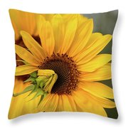 Lovely Sunflowers Throw Pillow