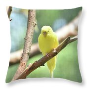 Lovely Yellow Budgie Parakeet In The Wild Throw Pillow