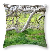 Low Branches On Sycamore Tree Throw Pillow