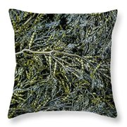 Low Tide Seaweed Throw Pillow