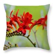 Lucifer Crocosima Flowers Throw Pillow