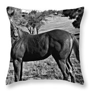 Lucky Student IIi Throw Pillow