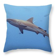 Lunch Anyone? Throw Pillow