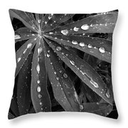 Lupin Leaves With Rain Drops  Throw Pillow