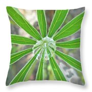 Lupine Leaf And Raindrop Throw Pillow