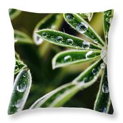 Lupine Leaves Decorated With Dew Drops Throw Pillow