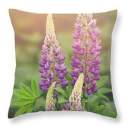 Lupine Sunrise Throw Pillow
