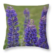 Lupines Throw Pillow