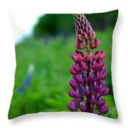 Lupins 2016 5 Throw Pillow