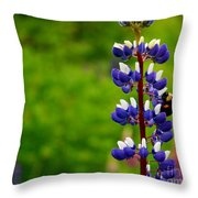Lupins 2016 6 Throw Pillow