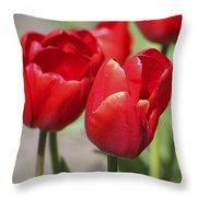 Luscious Tulips  Throw Pillow