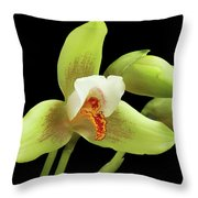 Lycaste Deppei Orchid Throw Pillow