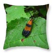 Lycomorpha Moth Throw Pillow