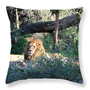 Lying Lion Throw Pillow
