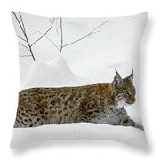 Lynx Hunting In The Snow Throw Pillow