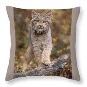 Lynx Kit Throw Pillow