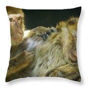 Macaques Jerez De La Frontera Spain Throw Pillow