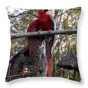 Macaw Guatemala Throw Pillow